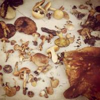 Delightful Foraging Finds ~ Telluride COcredit: Sophia Rose