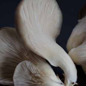 Mushroom: A Global History- New book by author CynthiaBertelsen