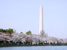 Fig. 7 Japanese cherry trees flowering around the Tidal Basin with the Washington monument in the background, Washington, DC (Courtesy of David F. Farr)
