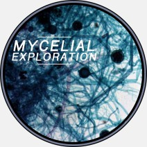 mycelial exploration