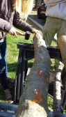 Photos from Tess's log cultivation workshop at Wayne State University.