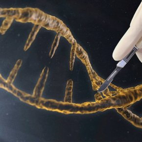 CRISPR-edited Mushrooms Approved byUSDA